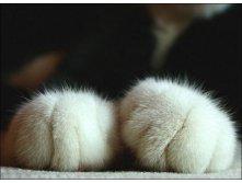 cat12.jpg