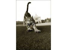 1320919895_cat-gary-parker-1.jpg