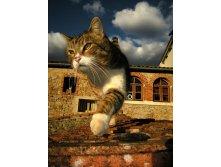 1320919834_cat-new-adventures.jpg