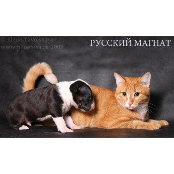 16803696 img 1873 copy - Таксы и кошки в одной квартире