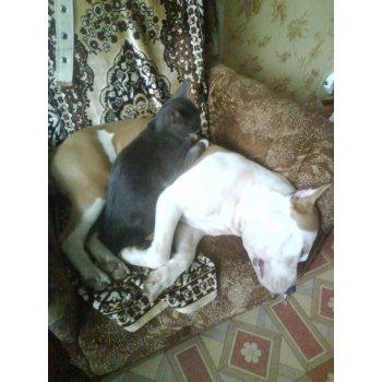 16805385 dsc02921 - Таксы и кошки в одной квартире