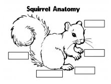 squirrel_complete-14.jpg