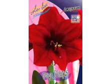 Hippeastrum Red Pearl 259,2 р за  1 шт.jpg