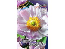 77_Anemone Queen Charlotte 215,5 р. за 3 шт..jpg