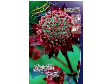 97_Astrantia Moulin Rouge 193,7 р. за 1 шт..jpg