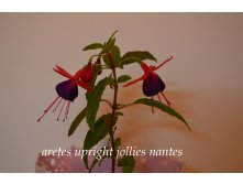 Aretes upright jollies nantes.jpg