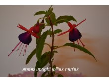 Aretes upright jollies nantes 1.jpg
