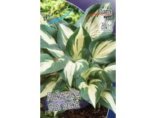 Hosta Lakeside Cupcake.jpg