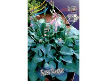 HOSTA BLUE CADET
