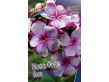 PHLOX NEON FLAIR BLUE