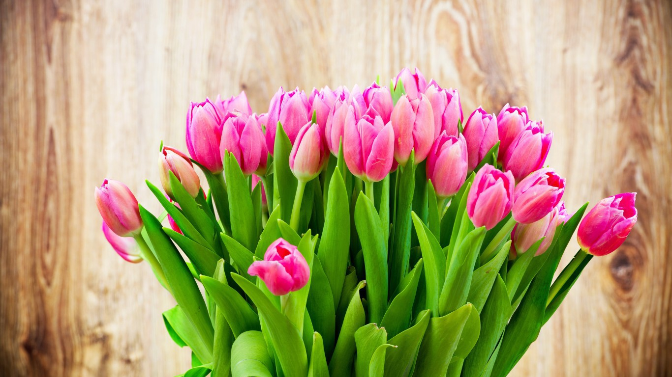 Holidays   International Womens Day Tenderly pink tulips in a bouquet on March 8 097093 .jpg